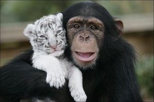 unlikely-animal-friends2