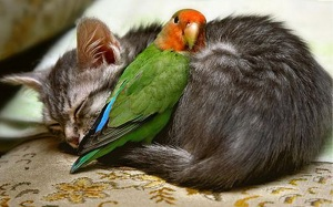 unlikely friendships 3