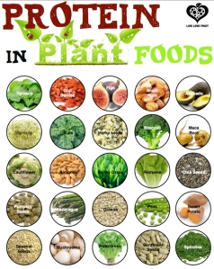 Protein-In-Plant-Food