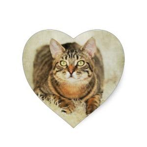 beautiful_tabby_cat_heart