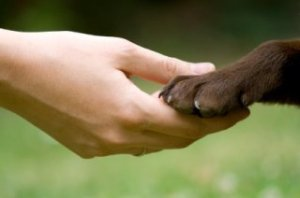 dog-paw-care-hand-and-paw