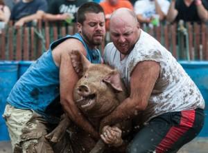 pig-wrestling